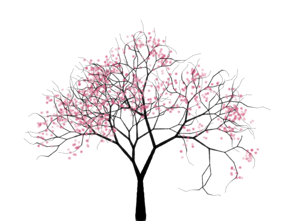 cherry blossom branch drawing. Cherry Blossoms